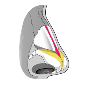 Nose-Illustration